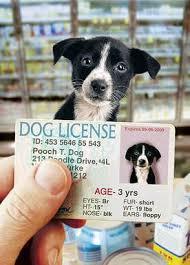 2021 Dog Licensing